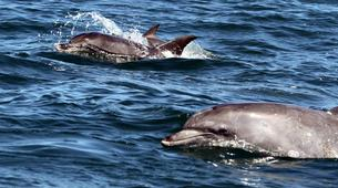 Wildlife Experiences-Plettenberg Bay-Dolphin watching excursions in Plettenberg Bay-1