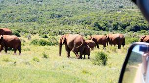 Safari-Cape Town-5D/4N Garden Route and Addo tour from Cape Town-1
