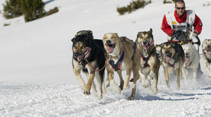 Dog sledding-Andorra-Mushing excursion in Grau Roig-2