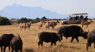 Safari-Cape Town-2D/1N Wildlife safari tour from Cape Town-4
