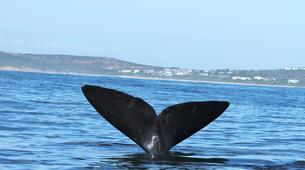 Wildlife Experiences-Plettenberg Bay-Whale watching excursion in Plettenberg bay-3