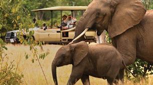Safari-Cape Town-2D/1N Wildlife safari tour from Cape Town-1
