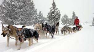 Dog sledding-Andorra-Mushing excursion in Grau Roig-5