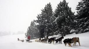 Dog sledding-Andorra-Mushing excursion in Grau Roig-4
