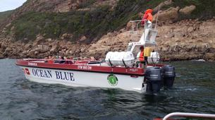 Wildlife Experiences-Plettenberg Bay-Whale watching excursion in Plettenberg bay-5