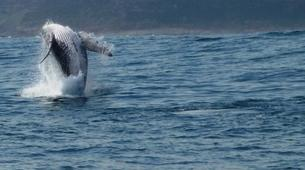 Wildlife Experiences-Plettenberg Bay-Whale watching excursion in Plettenberg bay-2