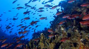 Scuba Diving-Saint-Leu-First scuba dive in Reunion Island-1