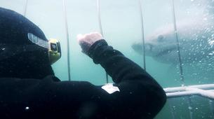Shark Diving-Mossel Bay-White shark cage diving in Mossel Bay-7