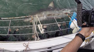 Shark Diving-Mossel Bay-White shark cage diving in Mossel Bay-5