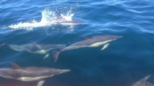 Wildlife Experiences-Plettenberg Bay-Dolphin watching excursions in Plettenberg Bay-4