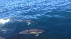Wildlife Experiences-Plettenberg Bay-Dolphin watching excursions in Plettenberg Bay-3