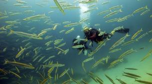 Scuba Diving-Ko Racha Yai-Discover scuba diving in Ko Racha Yai-4