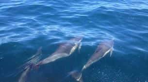 Wildlife Experiences-Plettenberg Bay-Dolphin watching excursions in Plettenberg Bay-5
