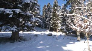 Snowshoeing-Saint Lary-Family friendly snowshoeing excursion in the Vallée d'Aure-3