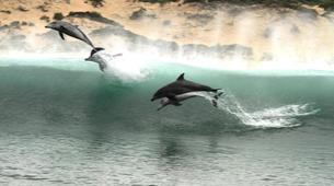 Wildlife Experiences-Plettenberg Bay-Dolphin watching excursions in Plettenberg Bay-6