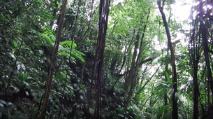 Canyoning-Guadeloupe-Canyon of Ravine Chaude in Guadeloupe-2