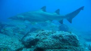 Shark Diving-Durban-Raggie diving excursion in Kwazulu Natal-2