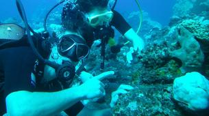 Scuba Diving-Saint-Leu-First scuba dive in Reunion Island-5