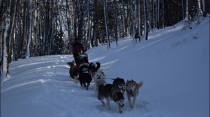 Dog sledding-Ariege-Mushing and snowshoeing excursion in Ariege near Foix-1