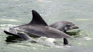 Wildlife Experiences-Plettenberg Bay-Dolphin watching excursions in Plettenberg Bay-2