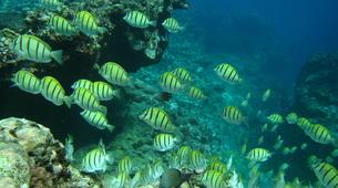 Scuba Diving-Saint-Leu-First scuba dive in Reunion Island-4
