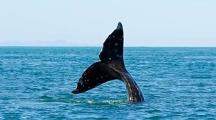 Experiences Wildlife-Kogelberg Nature Reserve-Southern right whale watching in Walker Bay-2