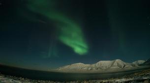 Chiens de traîneau-Svalbard-Northern lights mushing excursion in Longyearbyen, Svalbard-3