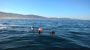 Scuba Diving-Hendaye-Scuba diving PADI courses in Hendaye-9