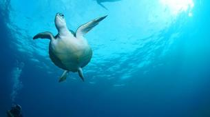 Plongée sous-marine-Costa Adeje, Tenerife-Snorkelling excursion in Costa Adeje, Tenerife-5