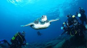 Plongée sous-marine-Costa Adeje, Tenerife-Adventure dives in Costa Adeje, Tenerife-1