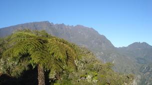 Randonnée / Trekking-Cirque de Salazie, Hell-Bourg-Randonnée dans la Forêt de Bélouve et le Trou de Fer à La Réunion-3