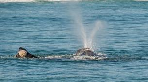 Experiences Wildlife-Kogelberg Nature Reserve-Southern right whale watching in Walker Bay-3