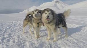Dog sledding-Svalbard-Private full day mushing excursion in Longyearbyen, Svalbard-2