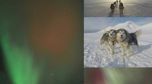Chiens de traîneau-Svalbard-Northern lights mushing excursion in Longyearbyen, Svalbard-4