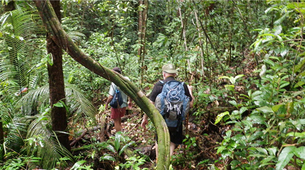 Hiking / Trekking-French Guiana-Hiking Expedition in the Amazon rainforest in French Guiana-6