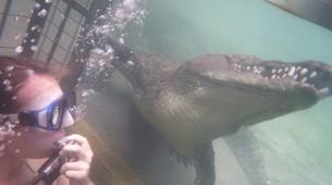 Crocodile Diving-Victoria Falls-Crocodile cage diving in Victoria Falls-4