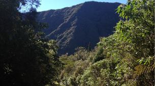 Randonnée / Trekking-Cirque de Salazie, Hell-Bourg-Randonnée dans la Forêt de Bélouve et le Trou de Fer à La Réunion-5