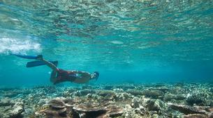 Plongée sous-marine-Costa Adeje, Tenerife-Snorkelling excursion in Costa Adeje, Tenerife-6