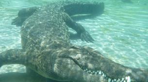 Crocodile Diving-Victoria Falls-Crocodile cage diving in Victoria Falls-5
