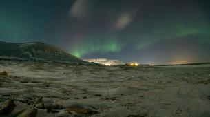 Chiens de traîneau-Svalbard-Northern lights mushing excursion in Longyearbyen, Svalbard-1