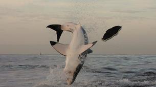 Experiences Wildlife-Kogelberg Nature Reserve-Ultimate ocean safari from Gordons Bay-1