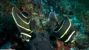 Plongée sous-marine-Les Trois-Îlets-Baptême de Plongée à l'Anse à l'Âne, Martinique-7