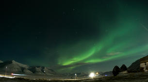 Chiens de traîneau-Svalbard-Northern lights mushing excursion in Longyearbyen, Svalbard-5