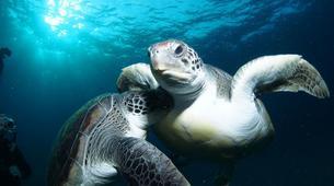 Plongée sous-marine-Costa Adeje, Tenerife-Snorkelling excursion in Costa Adeje, Tenerife-3