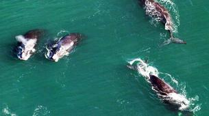 Experiences Wildlife-Kogelberg Nature Reserve-Southern right whale watching in Walker Bay-7