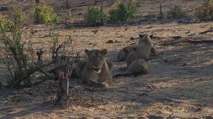 Safari-Victoria Falls-Chobe safari trips in Victoria Falls-3