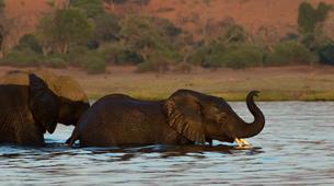 Safari-Victoria Falls-Chobe safari trips in Victoria Falls-1