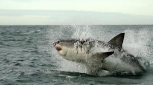 Experiences Wildlife-Kogelberg Nature Reserve-Ultimate ocean safari from Gordons Bay-3
