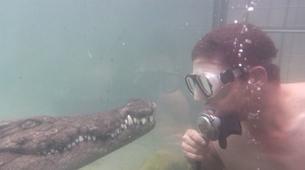 Crocodile Diving-Victoria Falls-Crocodile cage diving in Victoria Falls-1