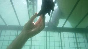 Crocodile Diving-Victoria Falls-Crocodile cage diving in Victoria Falls-2